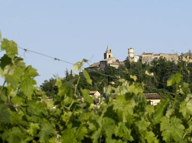 AOP PierrevertÀ mi-chemin entre les Alpes et la Méditerranée, dans le sud des Alpes de Haute-Provence...